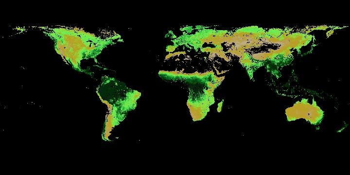 Leaf Area Index (1 month - Terra/MODIS)   NASA